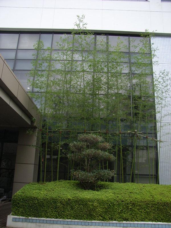GEヘルスケア様 エジソンの竹